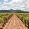 Las exportaciones de vino de la Región crecen un 13,8% hasta noviembre de 2017