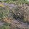 """La formación IUVerdes denuncia el uso """"indiscriminado"""" de herbicidas en las vías públicas"""