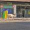 Un burro sin dueño se paseó por el centro de Jumilla