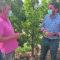 El Gobierno Regional muestra su apoyo para difundir la pera ercolini entre el consumidor