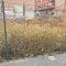 El Ayuntamiento inicia gestiones con el propietario de un solar abandonado en la calle Calvario