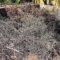 IUpide una solución para la eliminación de restos de podas en pequeñas parcelas