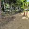 IUVerdes denuncia el posible uso de herbicidas en el Jardín Botánico y en zonas públicas