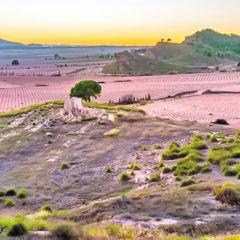 ANSE y Stipa alertan de los impactos que supondrá una planta fotovoltaica en Jumilla