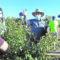 Un total de 15 alumnos del CIFEAse forman para crear empresas agrarias