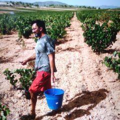En la DOP Jumilla baja la superficie de terrenos dedicados a la viticultura pero crece el número de botellas vendidas