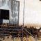Acrimur lleva a cabo la primera exportación de cabra de la raza murciano granadina a Qatar