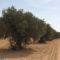 """Pedro García: """"El precio de la oliva ha bajado por la llegada de aceite de otros países"""""""