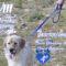 La VIII Marcha Solidaria subirá al Castillo con los perros abandonados del Albergue Municipal