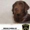 La Unidad Canina de la Policía Local intercepta a un individuo en posesión de 300 gramos de hachís