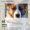 El taller de fotografía «Retrato perruno» ayudará a animales abandonados a tener mayor difusión para su adopción